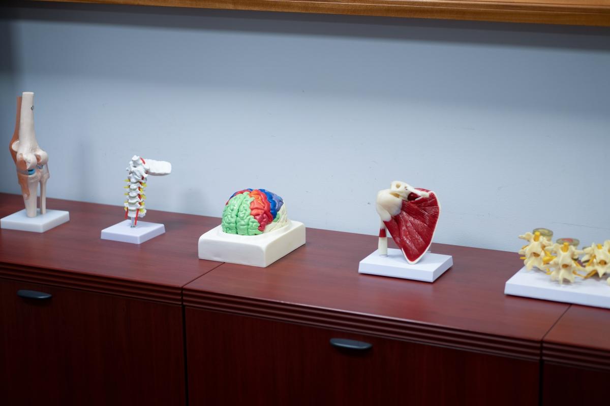 body injury models