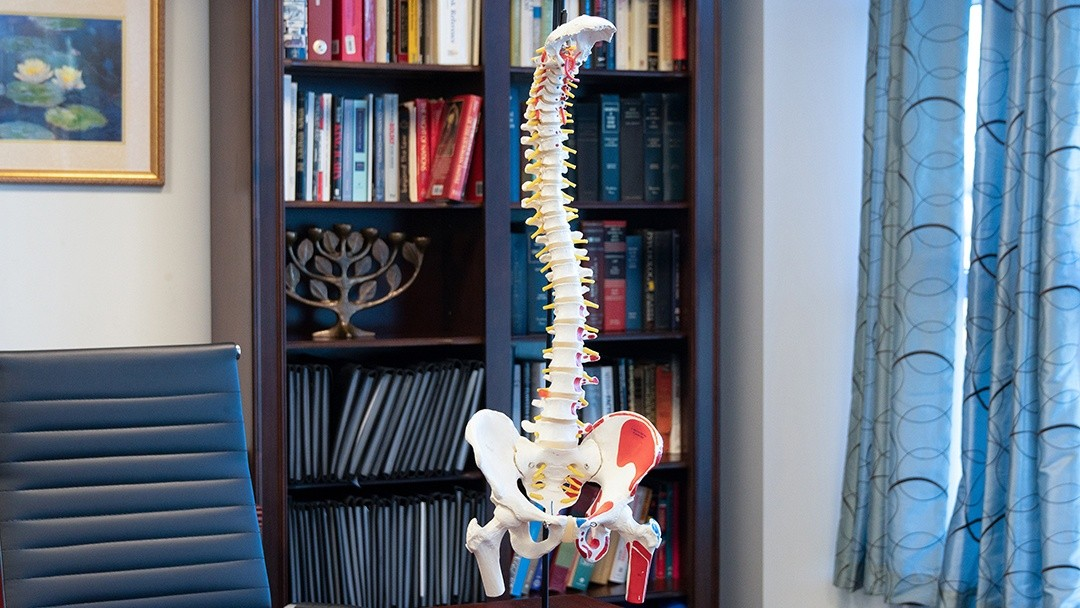 spine model used to show accident victim damage